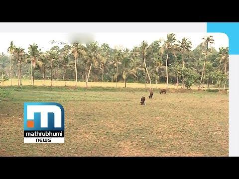 Antony Perumbavoor Takes A Vindictive Stand Against Farmers   Mathrubhumi News