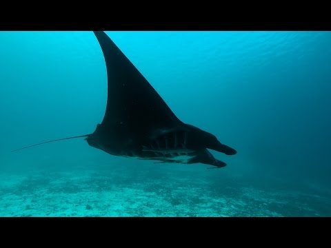 Amira liveaboard Indonesia diving, Gopro,  Macro underwater footage