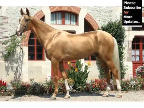 Horses For Sale In Jersey Channel Islands