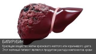 Билирубин. Толковый Видеословарь русского языка
