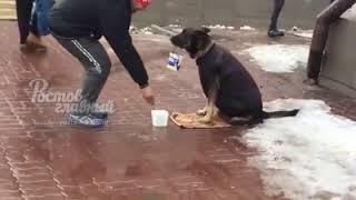 Зоозащитница приютила просившую на улицах милостыню собаку в Ростове