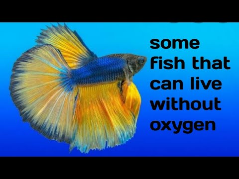 Some Fish That Can Live Without Extra Oxygen