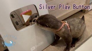 ベビーカワウソたちが銀の盾をもらいました!! Baby Otters Got a Silver Play Button!