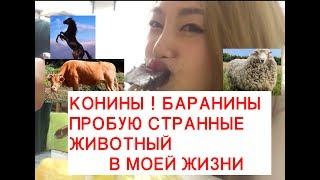 Кореянка Пробует КОНИНЫ!КУМЫС!КУРДАК!МОЯ ЛЮБОВЬ БЕШБАРМАК카자흐스탄 말고기 먹어보기|минкюнха|Minkyungha|경하