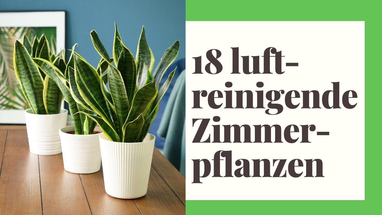 18 Luftreinigende Zimmerpflanzen Fur Gute Luft In Ihrem Zuhause Youtube