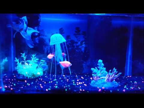 Introducing A Jellyfish Into A Glo-fish Tank (Glow Fish)