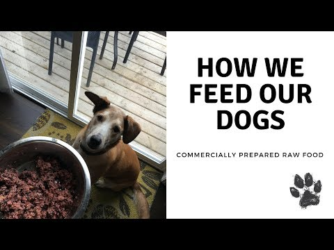 FEEDING OUR DOGS RAW FOOD | BALANCED DOG FOOD
