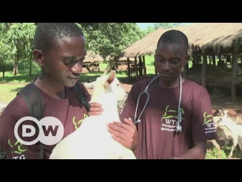 Tackling animal epidemics in Malawi | DW English