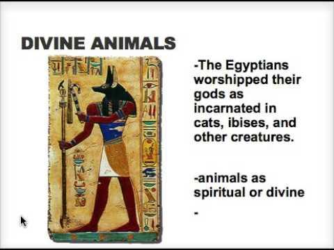 Animal Studies Introduction