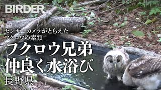 撮影日 2014年7月25日 撮影地 長野県 撮影機材 SONY HDR-FX7/TRAILM...