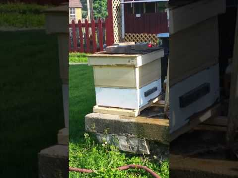 Just The Bees Doing Their Thing. Not Much Activity Yet.