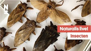 Naturalis Live!