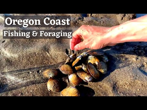 {Coastal Foraging Catch And Cook} Kelp Greenling & Oregon Bay Clams
