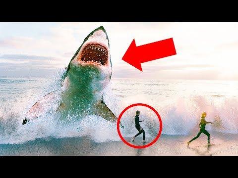 巨齒鯊已經完全絕種了嗎?