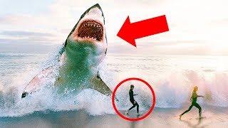 巨齒鯊已經完全絕種了嗎? thumbnail