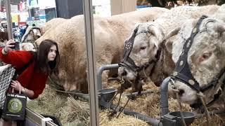 Les belles bêtes du salon de l'agriculture 2019