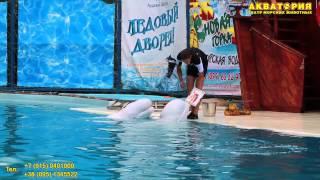 """Театр морских животных """"Акватория"""" (Ялта): Белые киты Проша и Ларик рисуют картину"""
