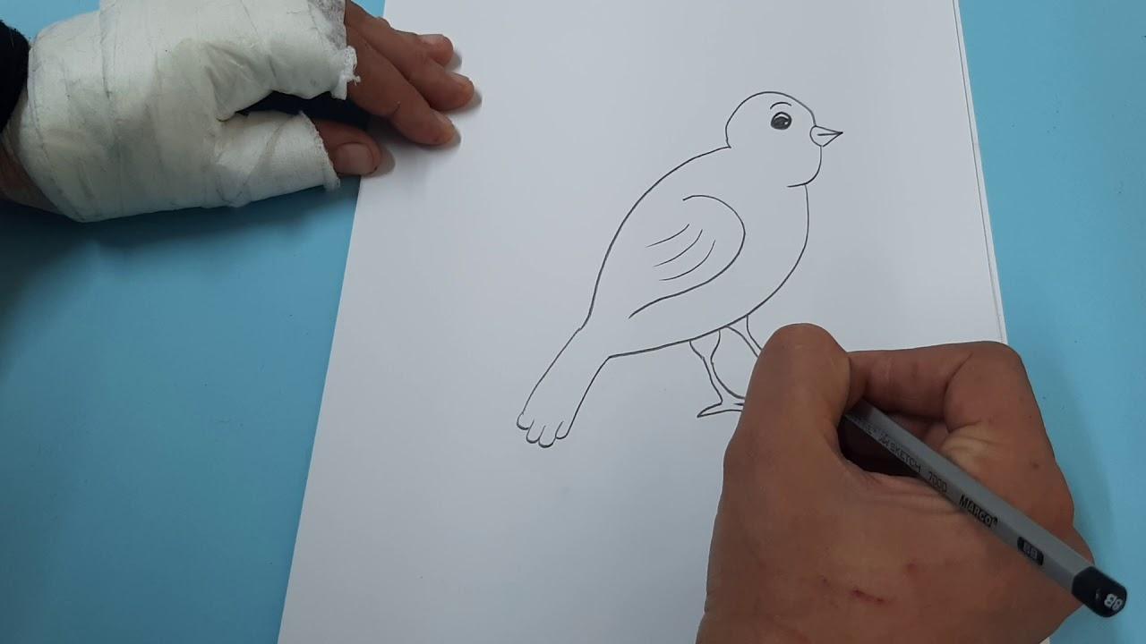 كيفية رسم عصفور How To Draw A Bird Youtube