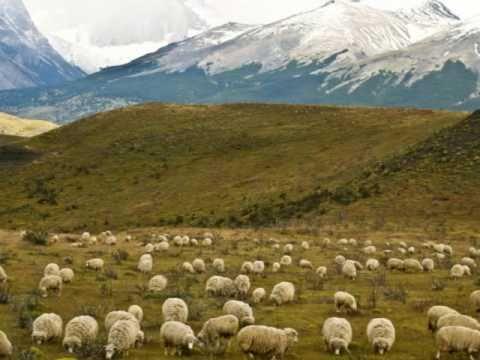 eran 100 ovejas marcos witt