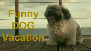 Funny Dog Dancing Butt Wiggle Kimmy Shih Tzu Puppy (hero Digital Production)