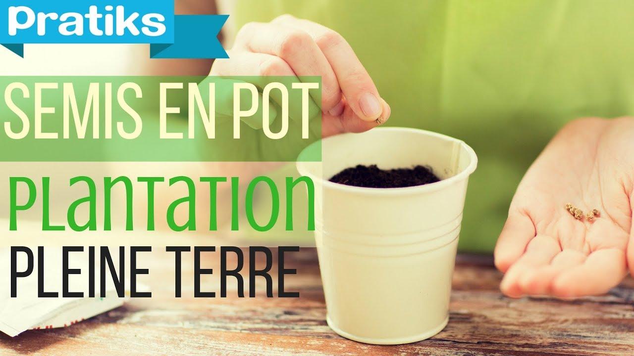 Comment Planter Les Graines De Persil semis en pot, division et plantation en pleine terre