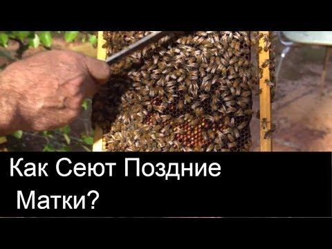 Видео Сколько делают наращивание ресниц