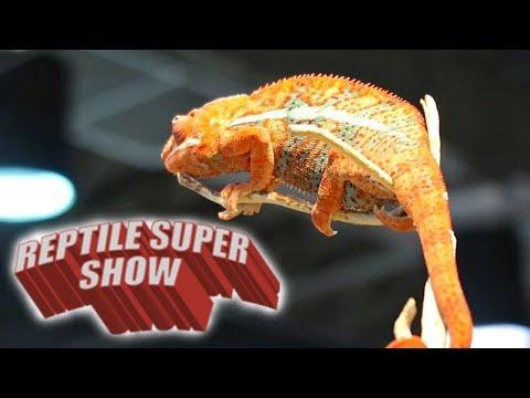 Reptile Super Show, Pomona 2017