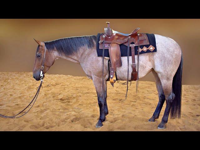 Russ Krachun Kozak Horsemanship - Versatility Horses - DRIFTER CAT 77 aka Rose - Video 1