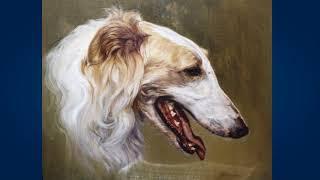 Русская борзая (Russian Wolfhound)