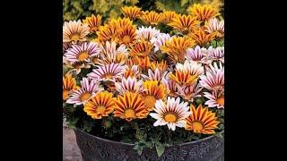 mои любимые цветы.03.02.2019