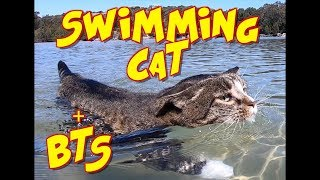 Swimming Cat Didga + BTS footage