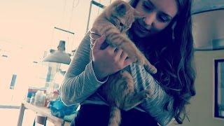 Heel veel katten in deze vlog | Vloggloss 251
