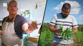 Latinx Entrepreneurs Of The Cannabis Industry