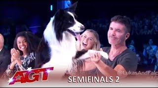 Lukas & Falco: Simon Cowell FIGHTS For This Dog After Slip Up | America's Got Talent 2019