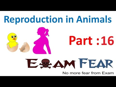 Biology Reproduction in Animals Part 16 (Viviparous & Oviparous Animals) Class 8  VIII