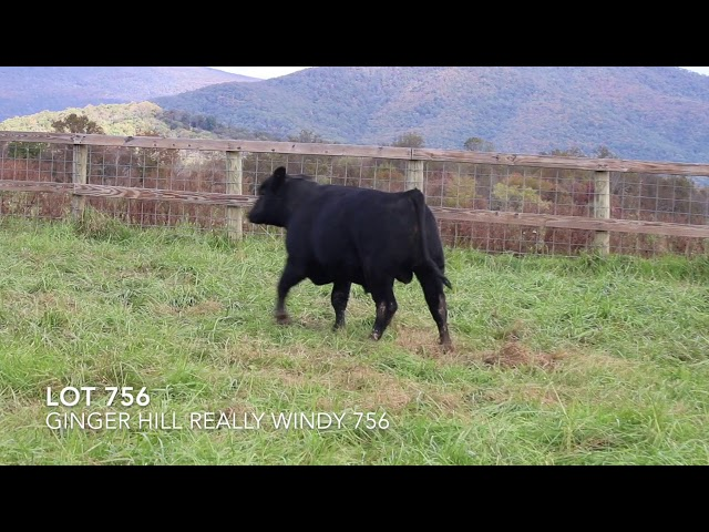 Ginger Hill Angus Lot 756
