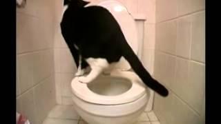 Кошка, приученная к туалету
