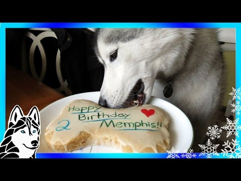 HOW TO MAKE A DOG BIRTHDAY CAKE Easy Recipe DIY | Snacks with the Snow Dogs 31