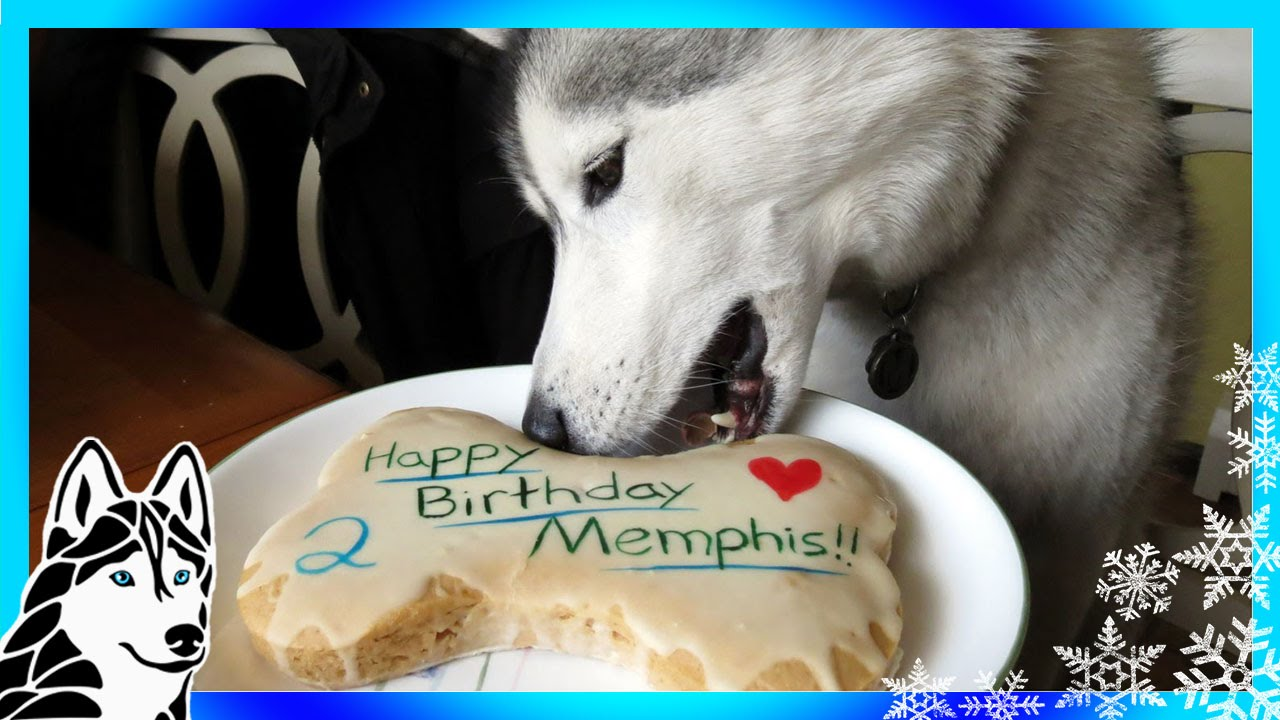 HOW TO MAKE A DOG BIRTHDAY CAKE Easy Recipe DIY Snacks with the