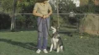 Heeling With Laura - Sirius Puppy Training Classic