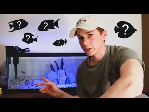 Top 5 Fish For A 20 Gallon Fish Tank - FishCast Ep:1