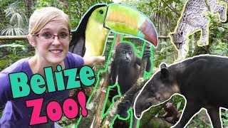 Touring the Belize Zoo!