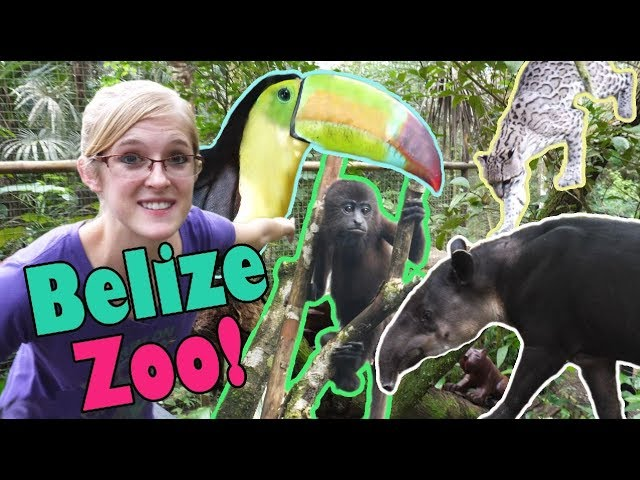 touring-the-belize-zoo