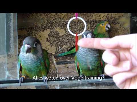 Tamme Parkiet en Vogeltraining