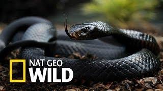 Mamba czarna - Schronisko dla węży