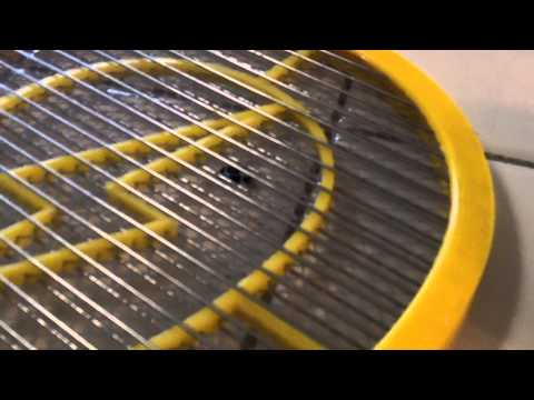 Housefly Suicide - Killing an Annoying House Fly with Electric Fly Swatter - Swatting Electrocution