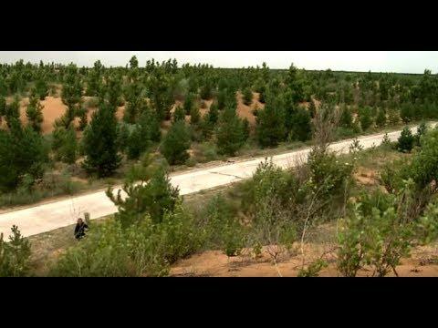 China's Kubuqi model offers solution to desertification