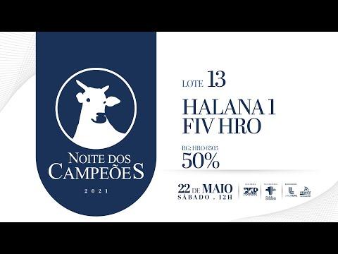 Lote 13   HALANA FIV  HRO Copy
