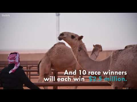 "Saudi Arabia Is Crowning ""Miss Camel"" This Month"