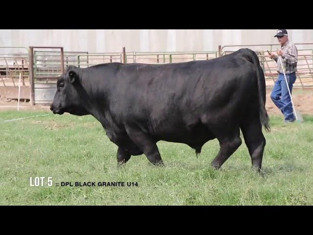 Dal Porto Livestock and Rancho Casino Lot  5